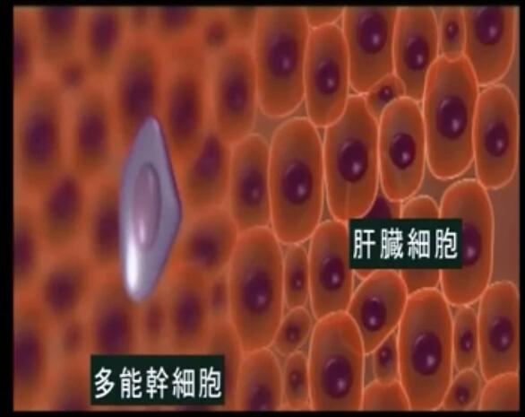 干细胞移植动画演示